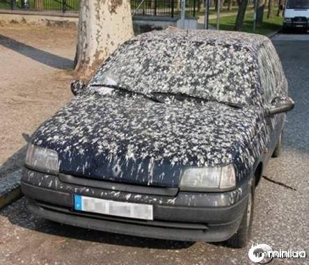 a98137_unlucky_8-angry-birds