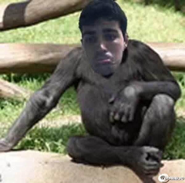 macaco5