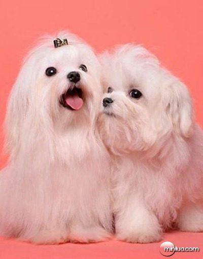 18_MVG_viv_cachorros1