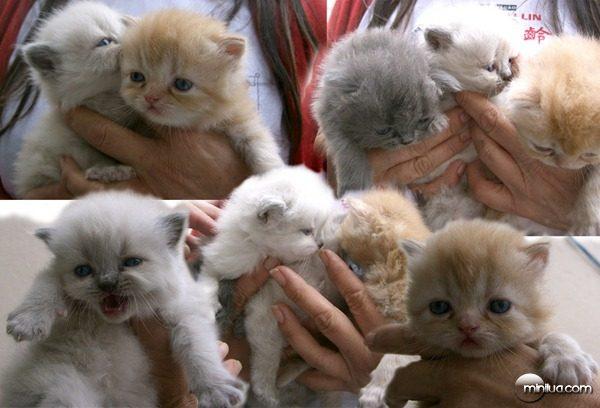 cat-cute-filhote-fofo-gato-Favim.com-339058