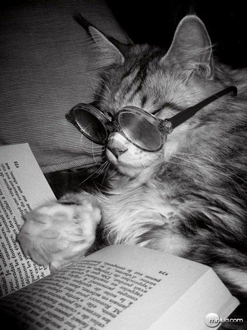 cat_books_640_18[5]