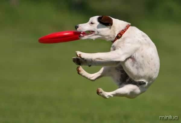 dog-picture-photo-catches-frisbee-jump