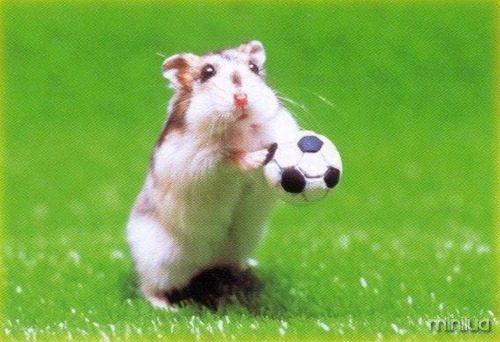 sport-lovers-animal-1