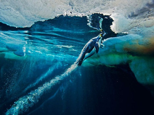 the_best_of_national_geographic_for_2012_640_01