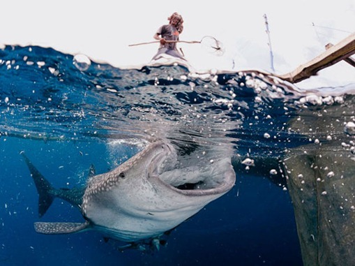 the_best_of_national_geographic_for_2012_640_36