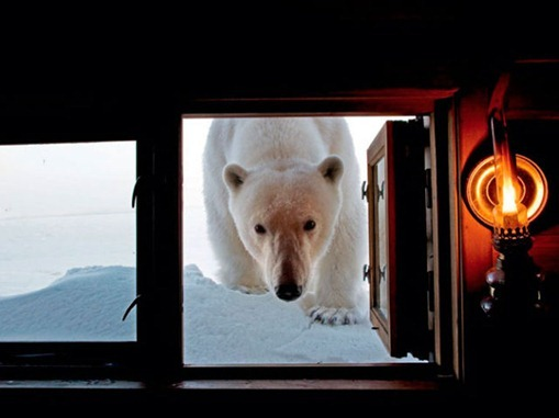 the_best_of_national_geographic_for_2012_640_38