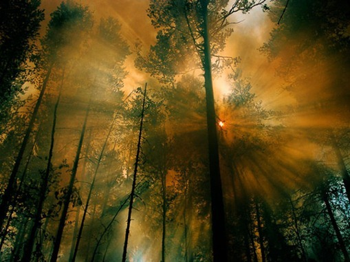 the_best_of_national_geographic_for_2012_640_44