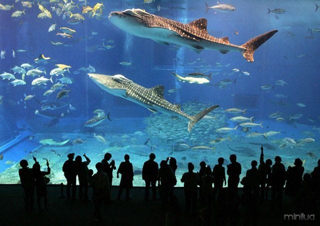 dubai-aquarium41