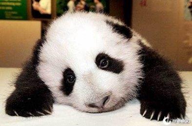 panda-baby-100629-02