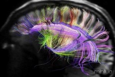 cerebro-investidor-20120726182621