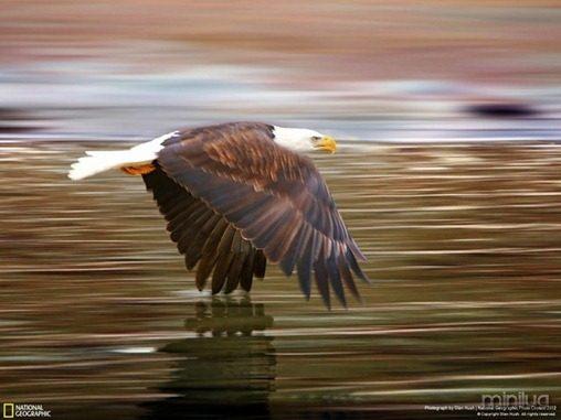 fotos da natgeo aguia[3]