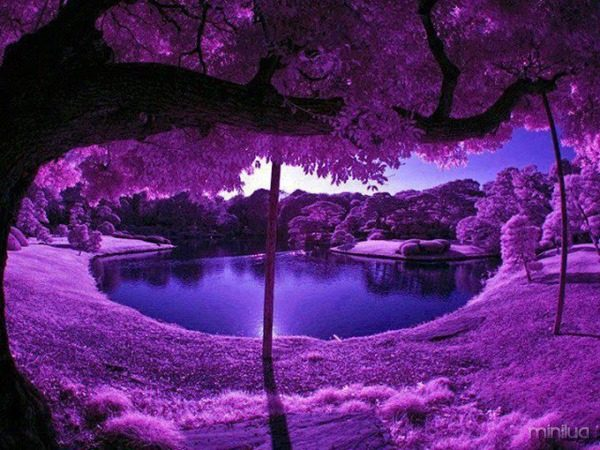 Purple Scenery at Japan's Garden