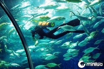 Aquario-Oceanico-de-Xangai