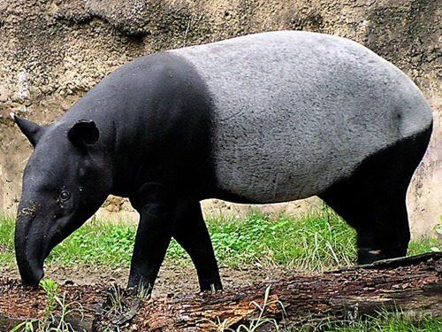 m-tapir_img01-l