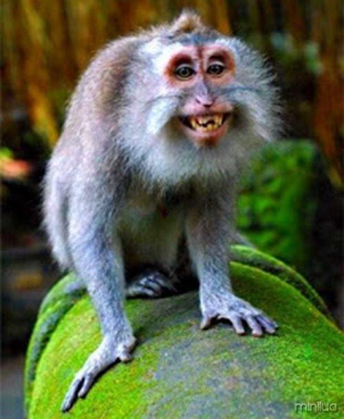 macaco-sorrindo7