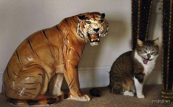 gatos-fotogenicos-17