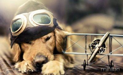 cachorro-aviador-wallpaper