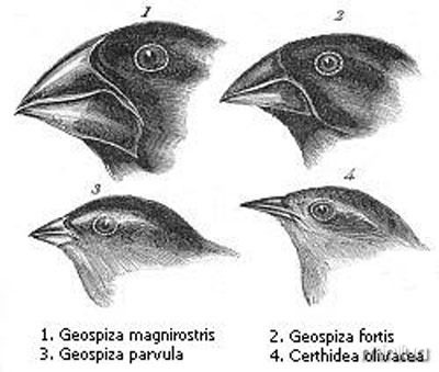 Tentilhões de Darwin
