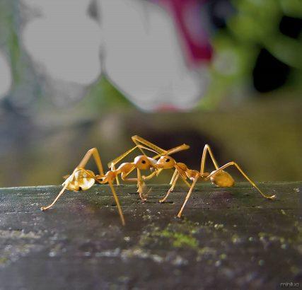 ants_in_love_w_img_2803