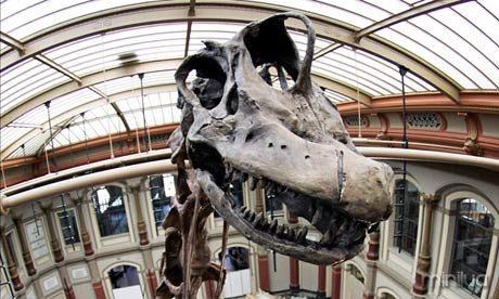 A Brachiosaurus dinosaur skeleton
