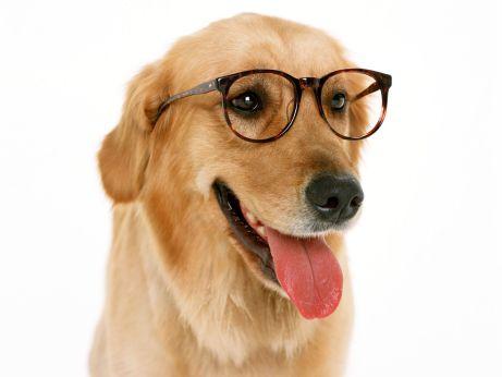 meu_amigo_pet_meu_cachorro_esta_enxergando_bem_quinta_3