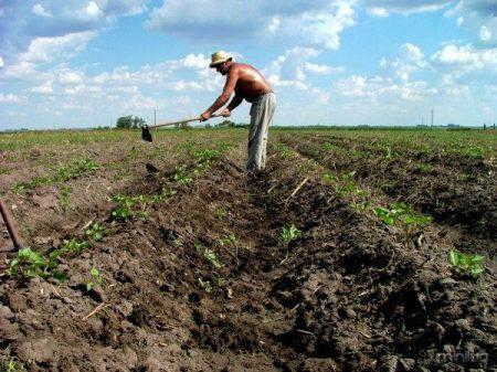Agricultura_en_Uruguay