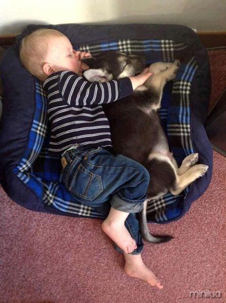babies-pets-4