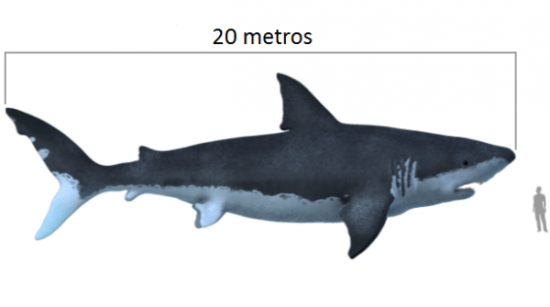 commons.wikimedia.org-Carcharodon_megalodon_size_compasison_with_man-610x341