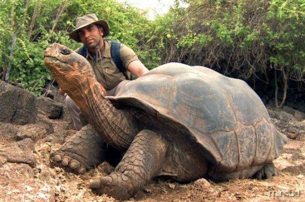 Tartaruga-Gigante-de-Galapagos-Dicas