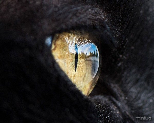 15-Macro-Shots-of-Cat-Eyes4__880