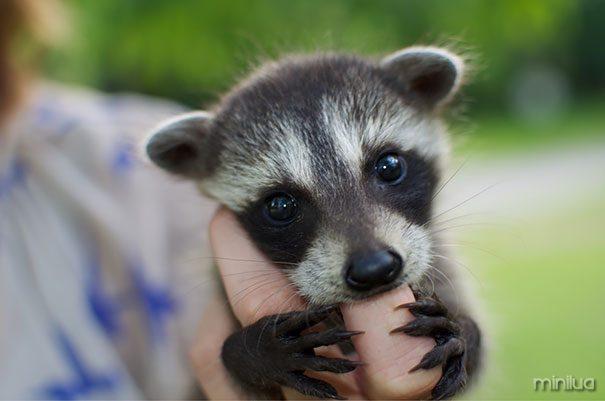 cutest-baby-animals-45__605
