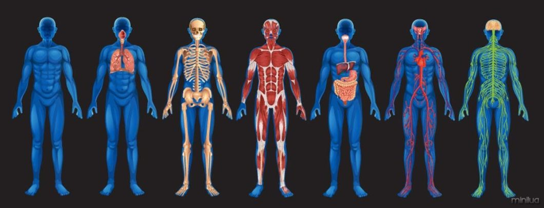 human-body-systems