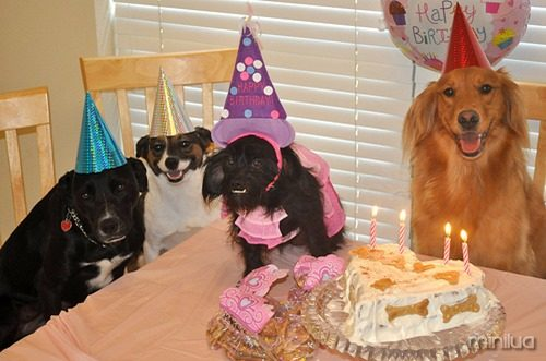 Decoração-de-Festa-para-Cachorro-51