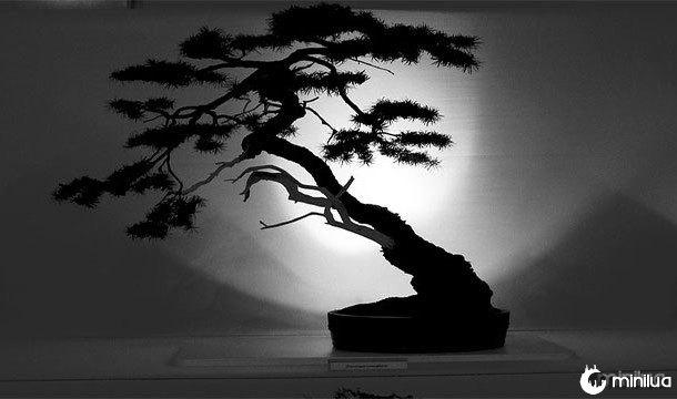 bonsai árvore