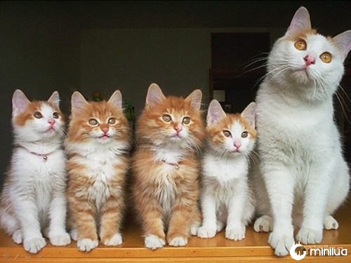 proud-cat-mommies-281__605 (1)