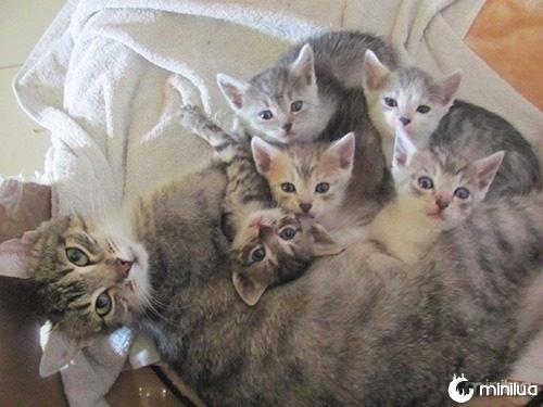 proud-cat-mommies-31__605