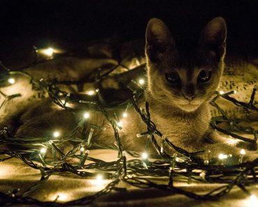 E quando os gatos comemoram o Natal?