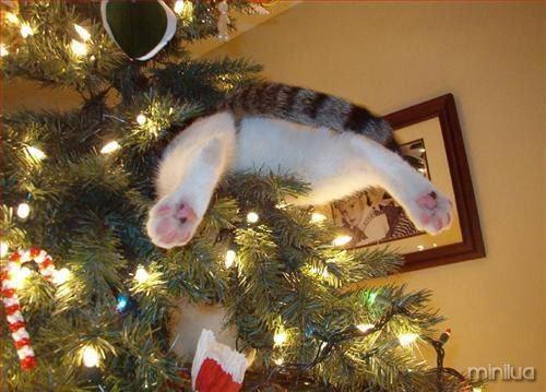 cat-stuck-in-tree