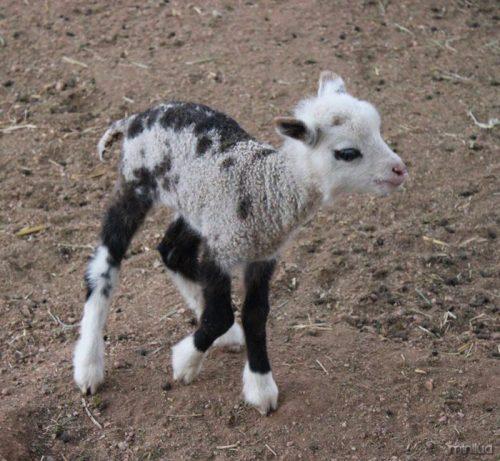 unusual-hybrid-animals-162