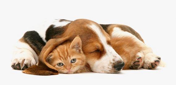 Filhotes-de-cachorro-podem-ter-um-futuro-melhor-com-a-sua-ajuda-Imagem-seucachorro