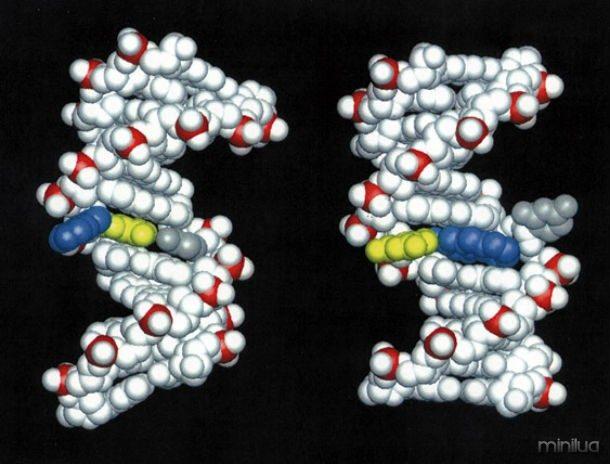 No entanto, as mutações podem ocorrer mudanças no apenas uma base de DNA ou podem envolver mais de um. As mutações também pode envolver segmentos inteiros de cromossomos.