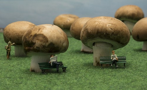 little people puppets sit on mushrooms in forest made from mushrooms