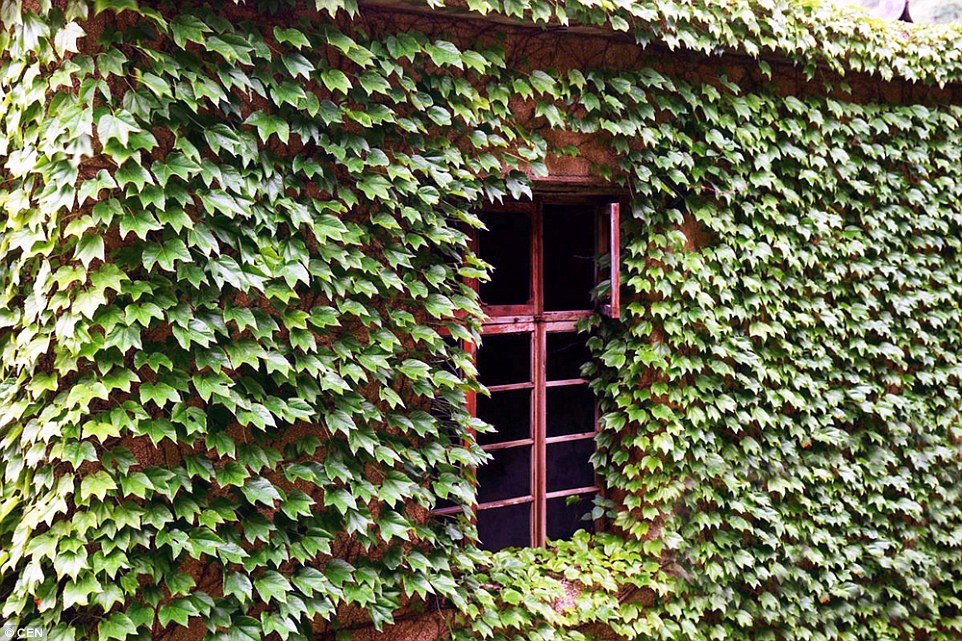297A58F200000578-3117557-Greenery_The_vines_climbing_up_buildings_along_the_paths_and_thr-a-45_1433896863643