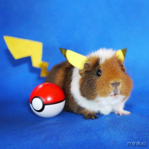 cosplay-guinea-pig-fuzzberta-1-595x595