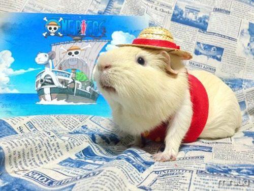 guinea-pig-cosplay-3