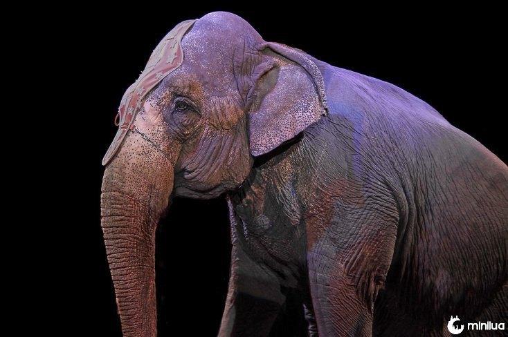 animais de circo Tamer
