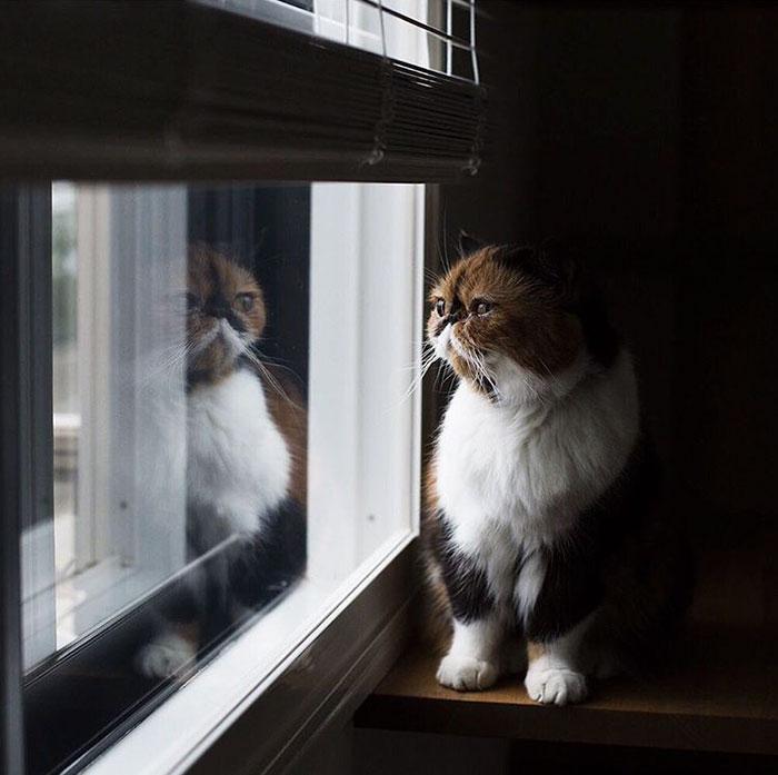 Este gato está liberando uma tampa emocional nova do som do silêncio