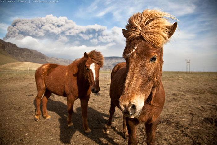 A faixa do pop do cavalo do duo dos anos 80 de Islândia