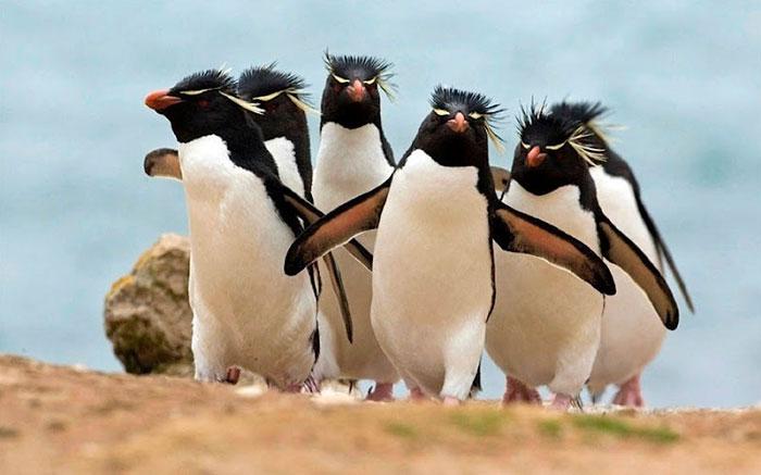 Os pingüins eletrônicos da rocha