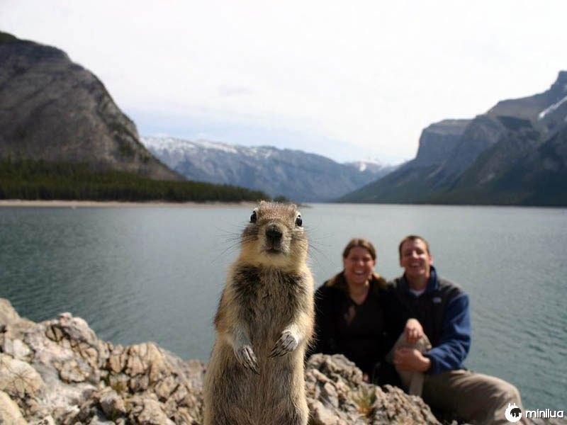 Squirrel-photobomb-banff